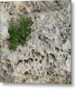 Life On Bare Rock - Pockmarked Limestone And Thyme Metal Print
