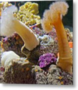 Life Under The Sea In Monterey Aquarium-california Metal Print