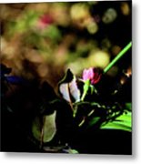 Light And Shadow In The Garden Metal Print