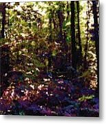 Light And Trees Wcsa  Metal Print