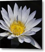 Light Blue Water Lily Metal Print