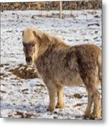 Light Brown Pony Metal Print