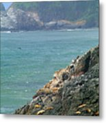 Light House And Sea Lions Metal Print