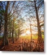 Light In The Cypress Trees II Metal Print