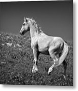 Light Mustang 1 Bw Metal Print