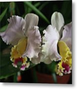 Light Pink And Yellow Orchid Metal Print