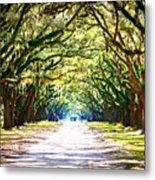 Light Through Live Oak Lane Metal Print