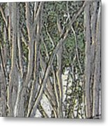 Light Through The Crepe Myrtles Metal Print