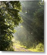 Light Unto My Path Metal Print