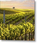Lighted Vineyard Metal Print by Sharon Foster
