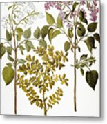Lilac And Box, 1613 Metal Print