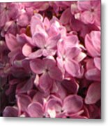 Lilac Beauty Metal Print