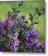 Lilac Enchantment Metal Print