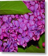Lilac In The Dark Metal Print