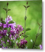 Lilac Memories Metal Print