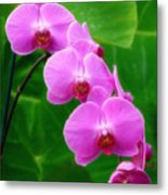 Lilac Orchid Beauties Metal Print