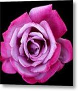 Lilac Rose Metal Print