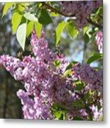 Lilacs 5545 Metal Print