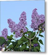 Lilacs In The Sky Metal Print