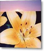 Lilies And Sky 3 Metal Print