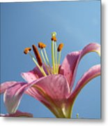 Lilies Art Prints Pink Lily Flower Giclee Art Prints Baslee Troutman Metal Print