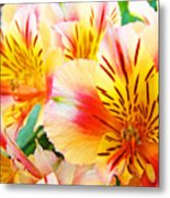Lilies Art Prints Pink Yellow Lily Flowers 1 Giclee Prints Baslee Troutman Metal Print