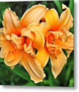 Lilies Collection - 1 Metal Print