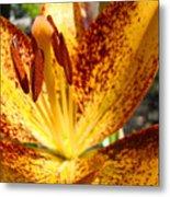 Lilies Glowing Orange Lily Flower Floral Art Print Canvas Baslee Troutman Metal Print
