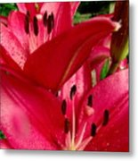 Lilies Of The Oaks Metal Print