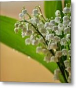Lilies Of The Valley 1 Metal Print