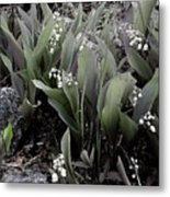Lilies Of The Valley Mindscape No 2 Metal Print