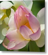 Lilies Of The Water Ib Metal Print