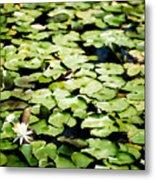 Lilies Of The Water Viii Metal Print