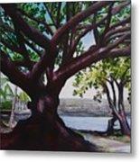 Liliuokalani Park Tree Metal Print