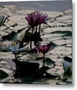 Lillies On The Lake Metal Print by Kimberly Camacho