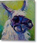 Lilloet - Llama Metal Print