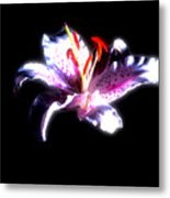 Lilly Flower  Metal Print