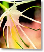 Lilly Flower Pastel Metal Print
