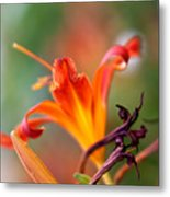 Lilly Flowers Metal Print