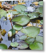 Lilly Hopping Metal Print