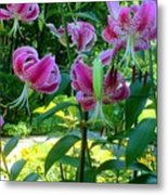 Lilly Love Metal Print