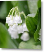 Lilly Of The Valley Metal Print