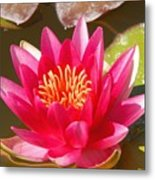 Lilly Pad With Bloom Metal Print