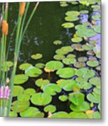 Lillypads And Cattails Metal Print