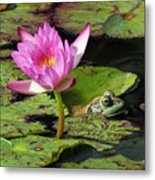 Lily And The Bullfrog Metal Print