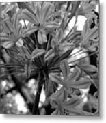 Lily And The Trees Metal Print