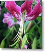 Lily At The Church Metal Print