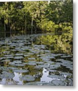 Lily Bend On Blind River Metal Print