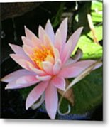 Lily Bloomed Metal Print