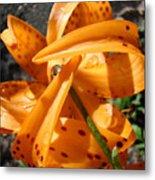 Lily Flower Art Prints Tiger Lilies Giclee Baslee Troutman Metal Print